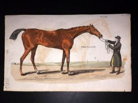 Brightly (Pub) 1811 Antique Hand Col Print. The Racer - Horse